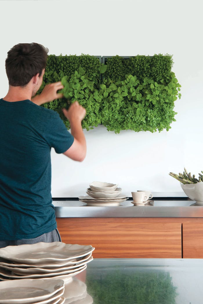"""Garden wall design with herb plants.<span class=""""sr-only""""> (opened in a new window/tab)</span>"""
