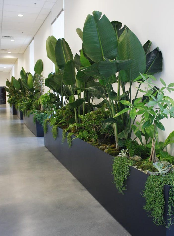 "Planter in a corridor with several different plants, great example of biophilic design.<span class=""sr-only""> (opened in a new window/tab)</span>"