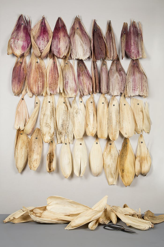 """Corn husks hanging on a wall before being transformed.<span class=""""sr-only""""> (opened in a new window/tab)</span>"""
