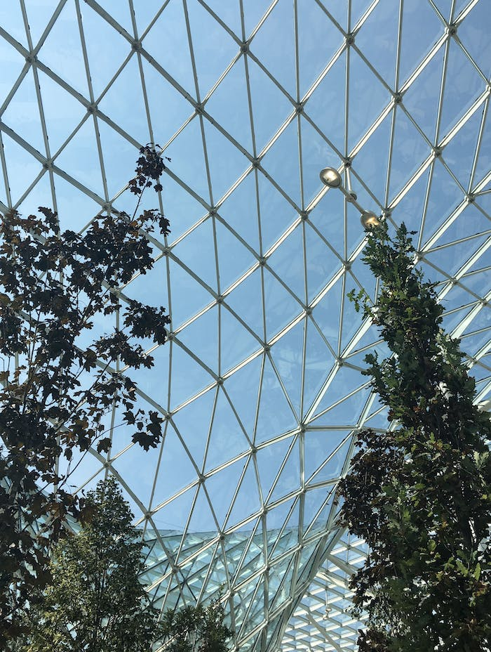 """Close-up of the trees against the glass roof.<span class=""""sr-only""""> (opened in a new window/tab)</span>"""