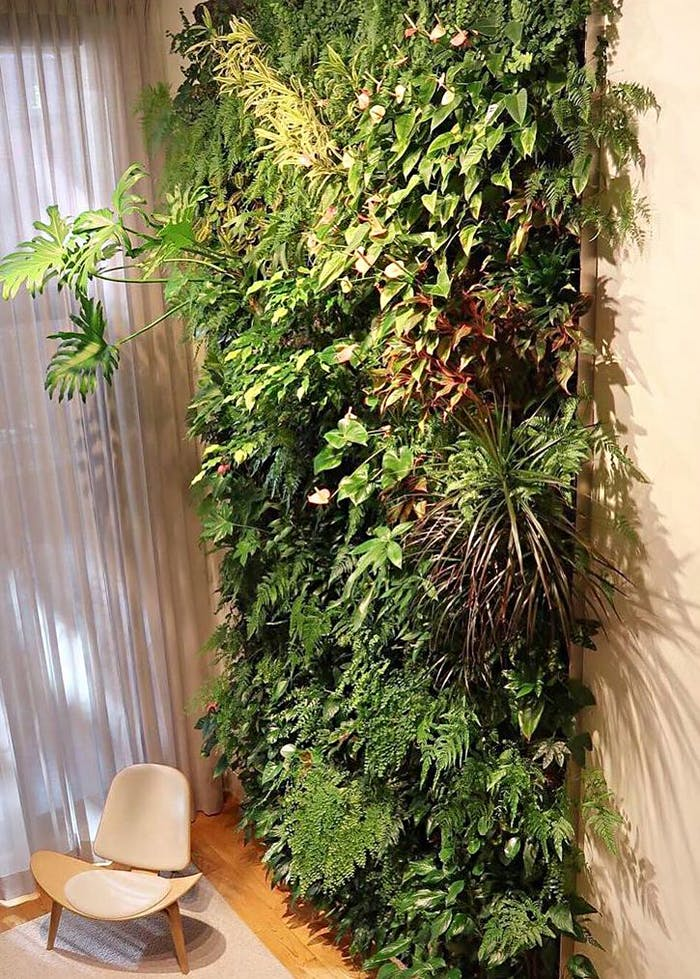 """Huge vertical garden in a living room.<span class=""""sr-only""""> (opened in a new window/tab)</span>"""