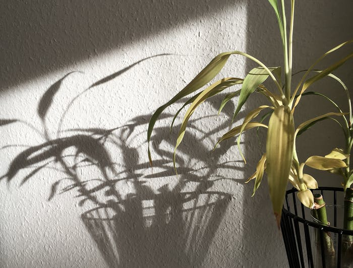 """Leafy arrangement reflecting on the wall nearby.<span class=""""sr-only""""> (opened in a new window/tab)</span>"""