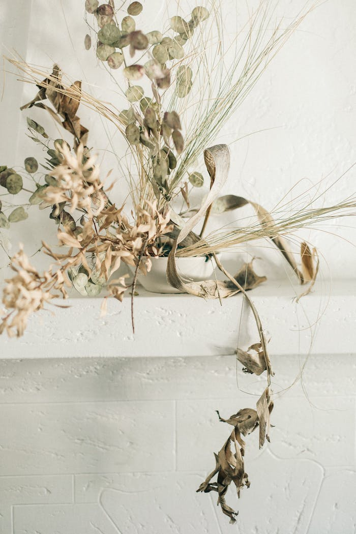 """Simple leaves and branches arranged in a drooping arrangement.<span class=""""sr-only""""> (opened in a new window/tab)</span>"""
