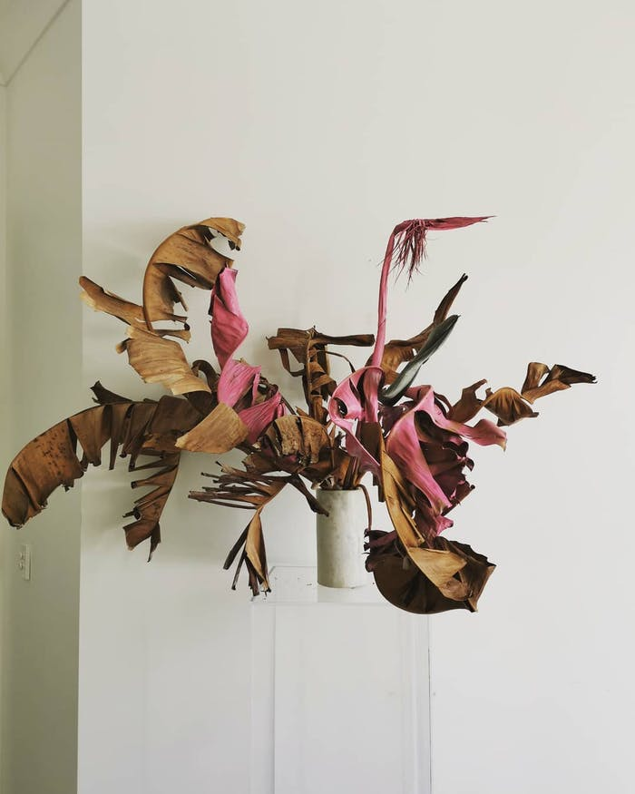 """An arrangement of oddly shaped leaves.<span class=""""sr-only""""> (opened in a new window/tab)</span>"""