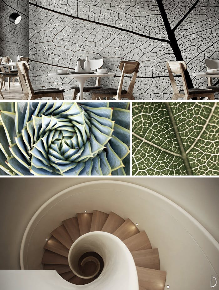 "Biophilic design moodboard showing examples of fractals in nature and interiors: a leaf pattern and a wallpaper reproducing it, the spiral shape of a succulent and a spiral staircase.<span class=""sr-only""> (opened in a new window/tab)</span>"