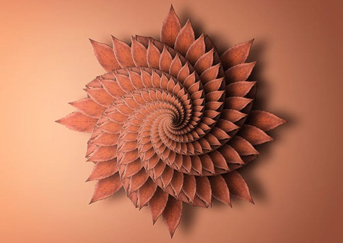 "Print reproducing the fractal spiral of a plant.<span class=""sr-only""> (opened in a new window/tab)</span>"