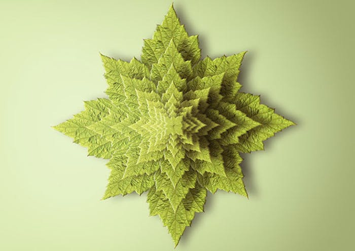 "Fractal print reproducing a plant seen from above.<span class=""sr-only""> (opened in a new window/tab)</span>"