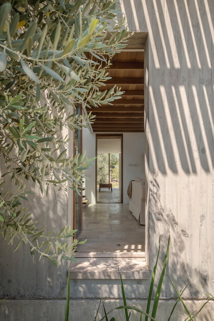 """View into a home from the outside, with plants swinging and interesting light reflections.<span class=""""sr-only""""> (opened in a new window/tab)</span>"""