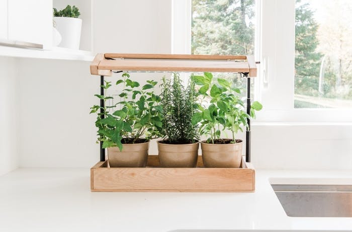 "Herb plants growing in a mini greenhouse on a kitchen counter.<span class=""sr-only""> (opened in a new window/tab)</span>"
