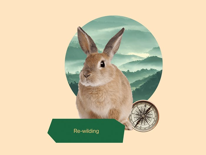 """""""Re-wilding"""" graphic representing a rabbit, a compass and a natural landscape.<span class=""""sr-only""""> (opened in a new window/tab)</span>"""