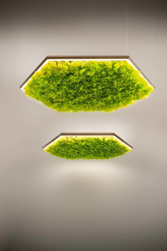 "Exagon pendant light filled with sound-absorbing lichens.<span class=""sr-only""> (opened in a new window/tab)</span>"