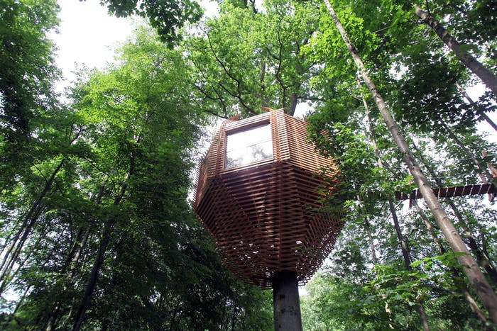 """View of the outdoors showing the treehouse immersed in the foliage.<span class=""""sr-only""""> (opened in a new window/tab)</span>"""