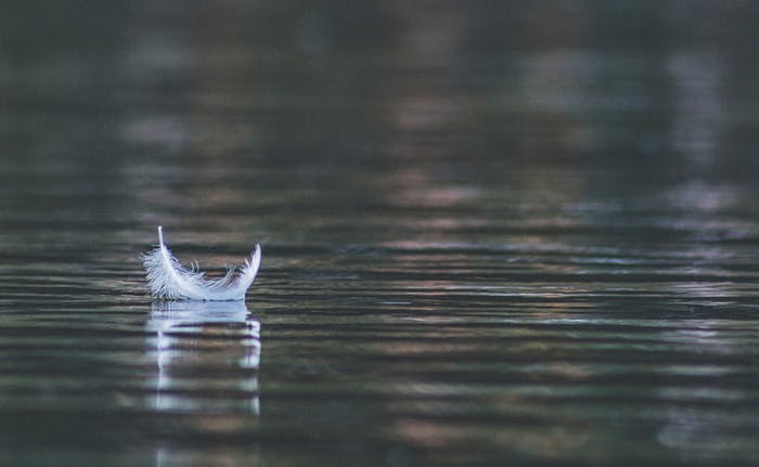 """A feather floating on water.<span class=""""sr-only""""> (opened in a new window/tab)</span>"""