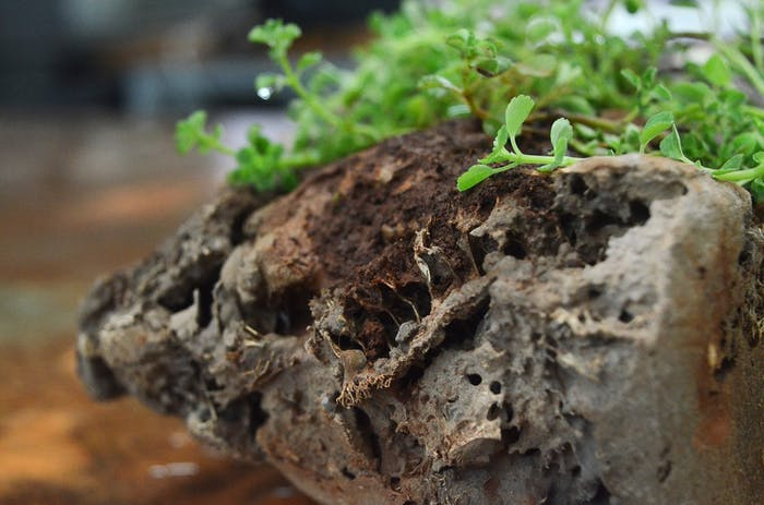"""Close-up of a Green Charcoal bio-brick with plants growing on it.<span class=""""sr-only""""> (opened in a new window/tab)</span>"""