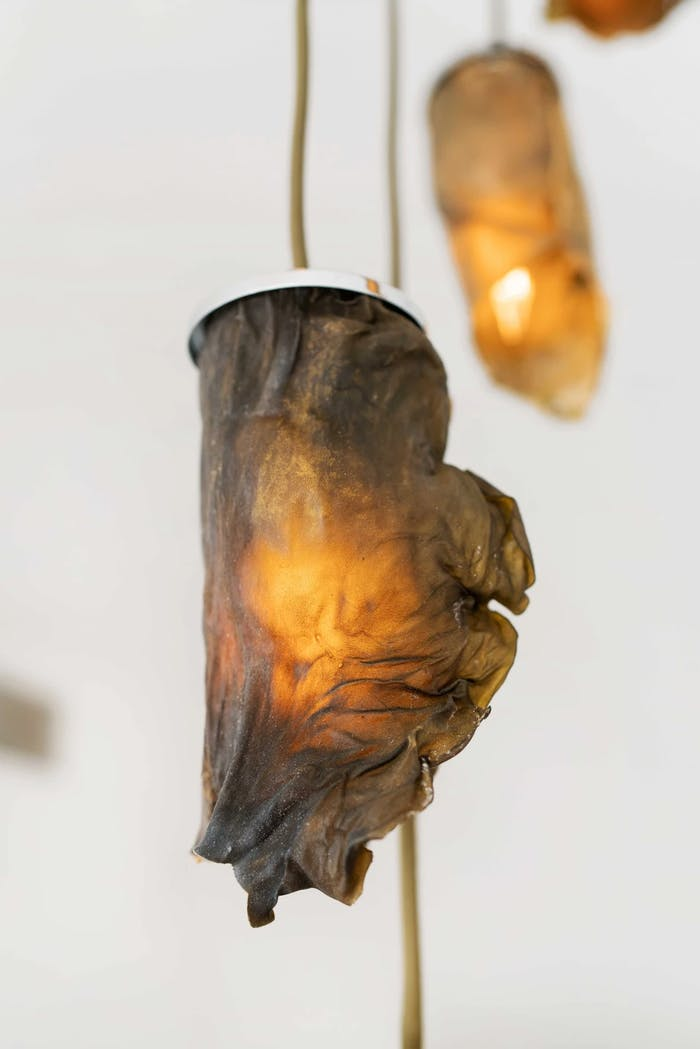 """View from the side of a pendant algae lamp.<span class=""""sr-only""""> (opened in a new window/tab)</span>"""