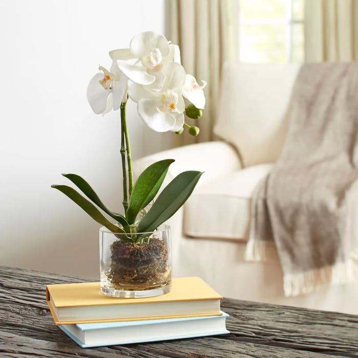 "An orchid potted in a see-through vase.<span class=""sr-only""> (opened in a new window/tab)</span>"